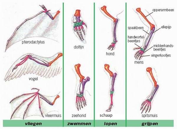Analoge Organe